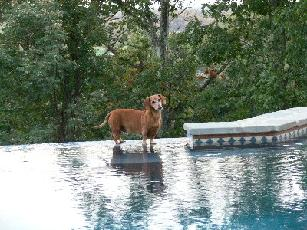 MyPets Software Walking on Water